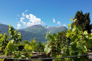 Tenuta Casa Cima, Guesthouse, mountain view