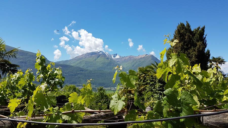 Tenuta Casa Cima, Guesthouse mountain view