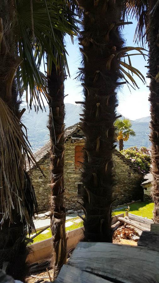 Tenuta Casa Cima, Guesthouse, Garten und Palmen