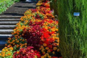 Insel Mainau, Treppe mit Blumen