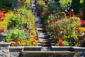 Insel Mainau, Brunnen mit Blumen