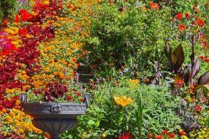 Insel Mainau,Blumenbeet