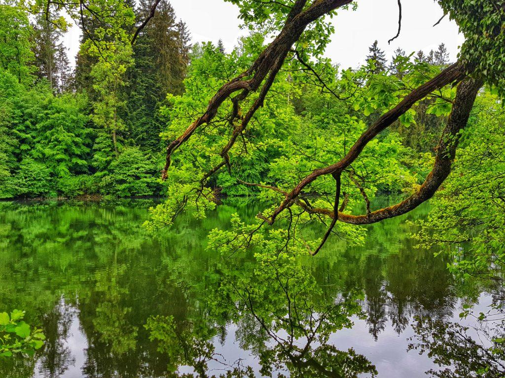 Big oak trees surround the Sihl Pond