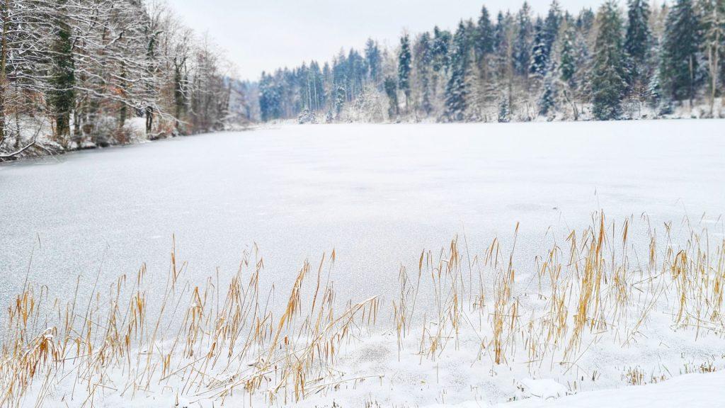 Winter Impression Sihlwald