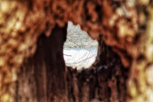 View through a dead tree, in the background the Silwald Pond.