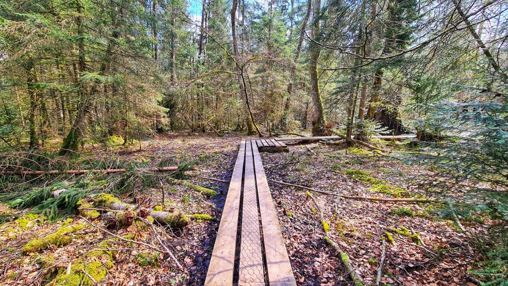 Forest Nature Trail Sihlwald, a wooden walkway leads past various attractions.
