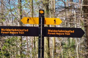 Forest Nature Trail Sihlwald