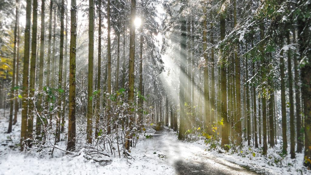 When sunlight shines through trees, beautiful Winter Impressions from the Sihlwald