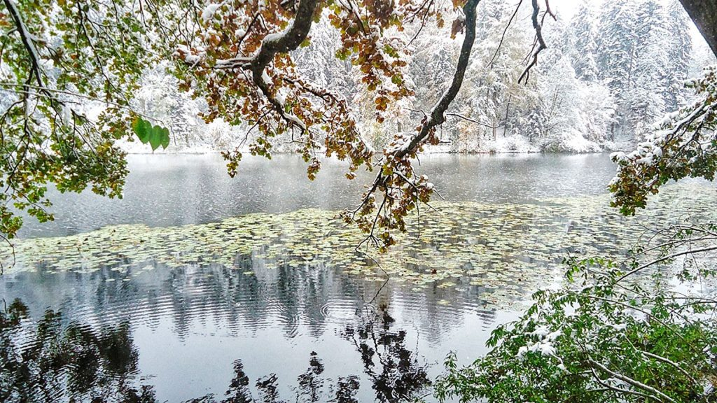 Winter Impression Sihlwald Pond