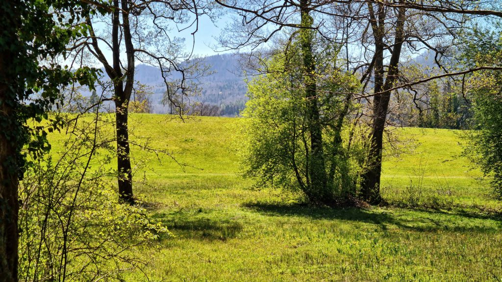 Sihlwald, Sihl Valley Impressions 2021, Green Meadow