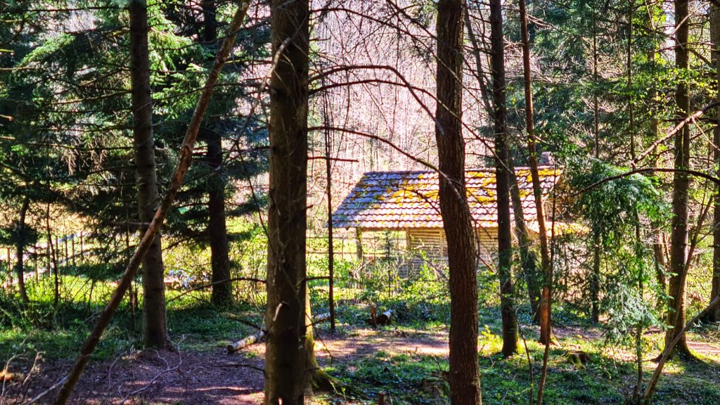 Sihlwald, Sihl Valley Impressions 2021, Forest cottage