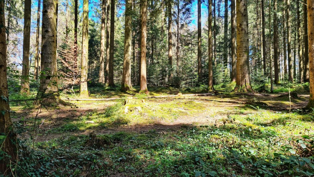 Sihlwald, Sihl Valley Impressions 2021, Forest sun