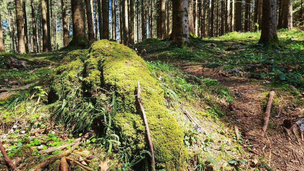 Sihlwald, Sihl Valley Impressions 2021, Green moss